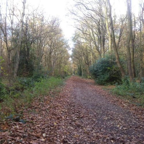 """say-nothing-just-listen:  """" Beautiful day to take the dog for a walk #walk #forest #wood #trees #autumn #fall #leaves (at Sandle Beat Wood)  """""""