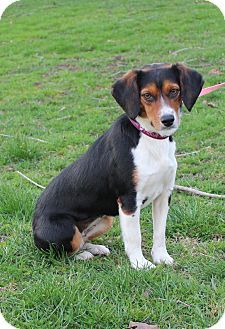 Newark Nj Beagle Mix Meet Sara A Dog For Adoption Http Www