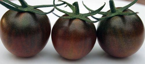 Thelittlefrenchbullblog Gardengrab Black Cherry Tomato 400 x 300