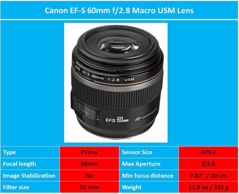 Best Macro Lenses For Canon Macro Lens Canon Macro Lens Canon Lens