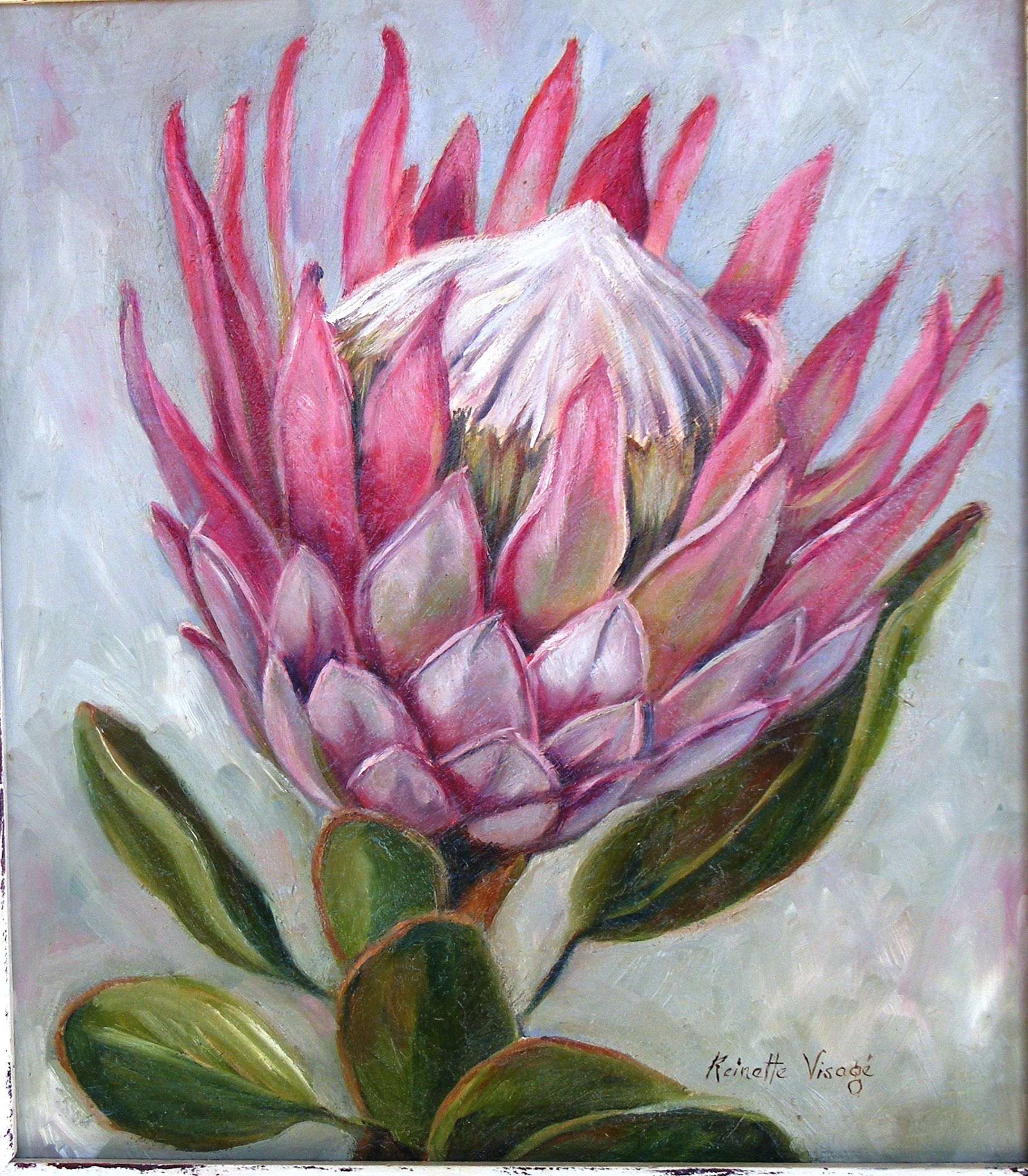 King Protea Oilpainting By R Visage Protea Art Flower Art Flower Drawing