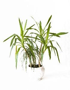 The Best Evergreen Plants for Containers