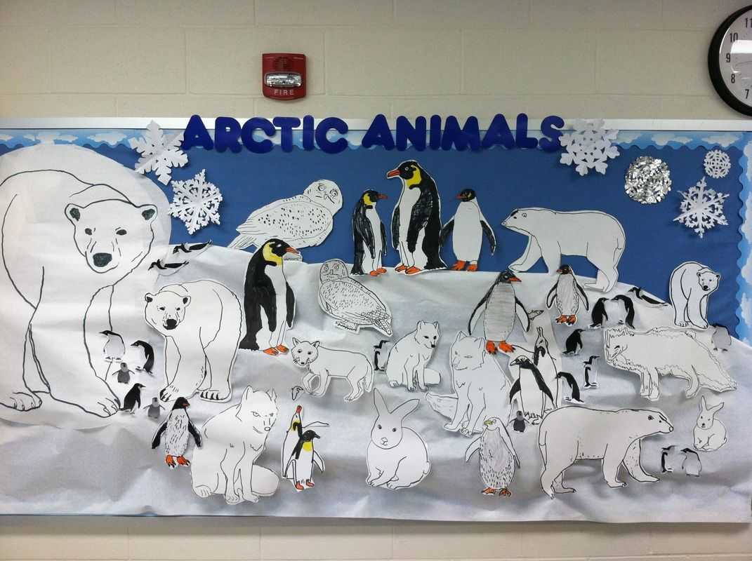 Arctic Animal Bulletin Board