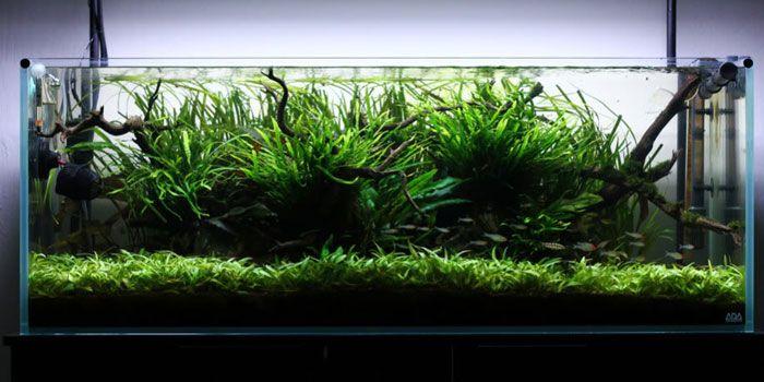 Top  Best Aquarium Plants For Aquascaping