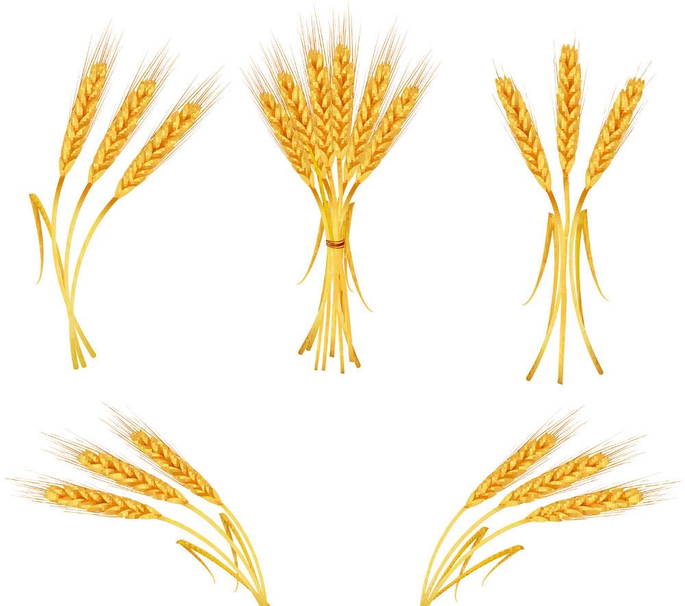 Free Vector Yellow Wheat 04