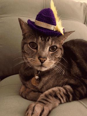 Pin On Dress Up Kitties