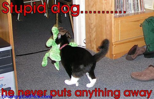 Funny Pictures With Captions Clean With Animals Funny Dogs with...