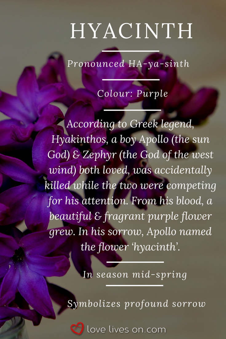 Purple Hyacinth Meaning Purple Hyacinth Symbolizes Deep Sorrow Making It A Very Appropriate Funera Funeral Flowers Flower Meanings Funeral Flower Arrangements