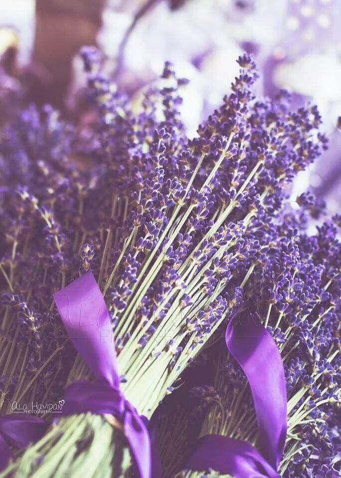 Pin by رهان 🦋 Rehan on ورد Flower Lavender, Plants