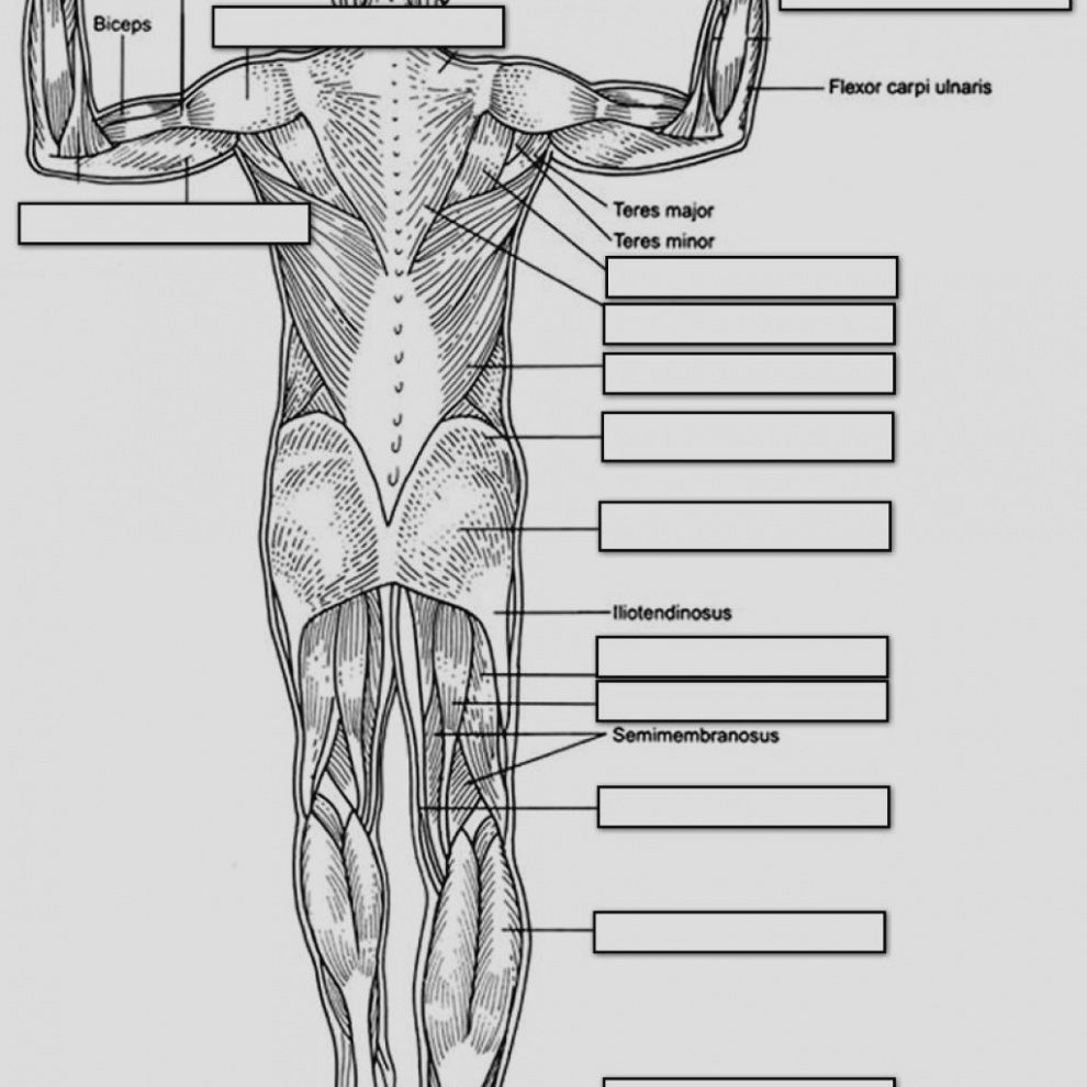 anatomy and physiology coloring pages free Download ...