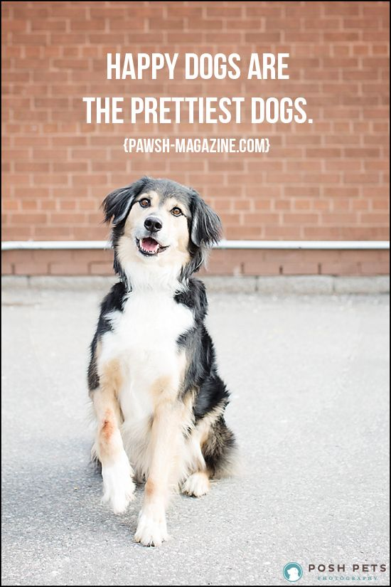 As Dogs Would Say Dog Quote 16 Dogs Pretty Dogs Dog Quotes