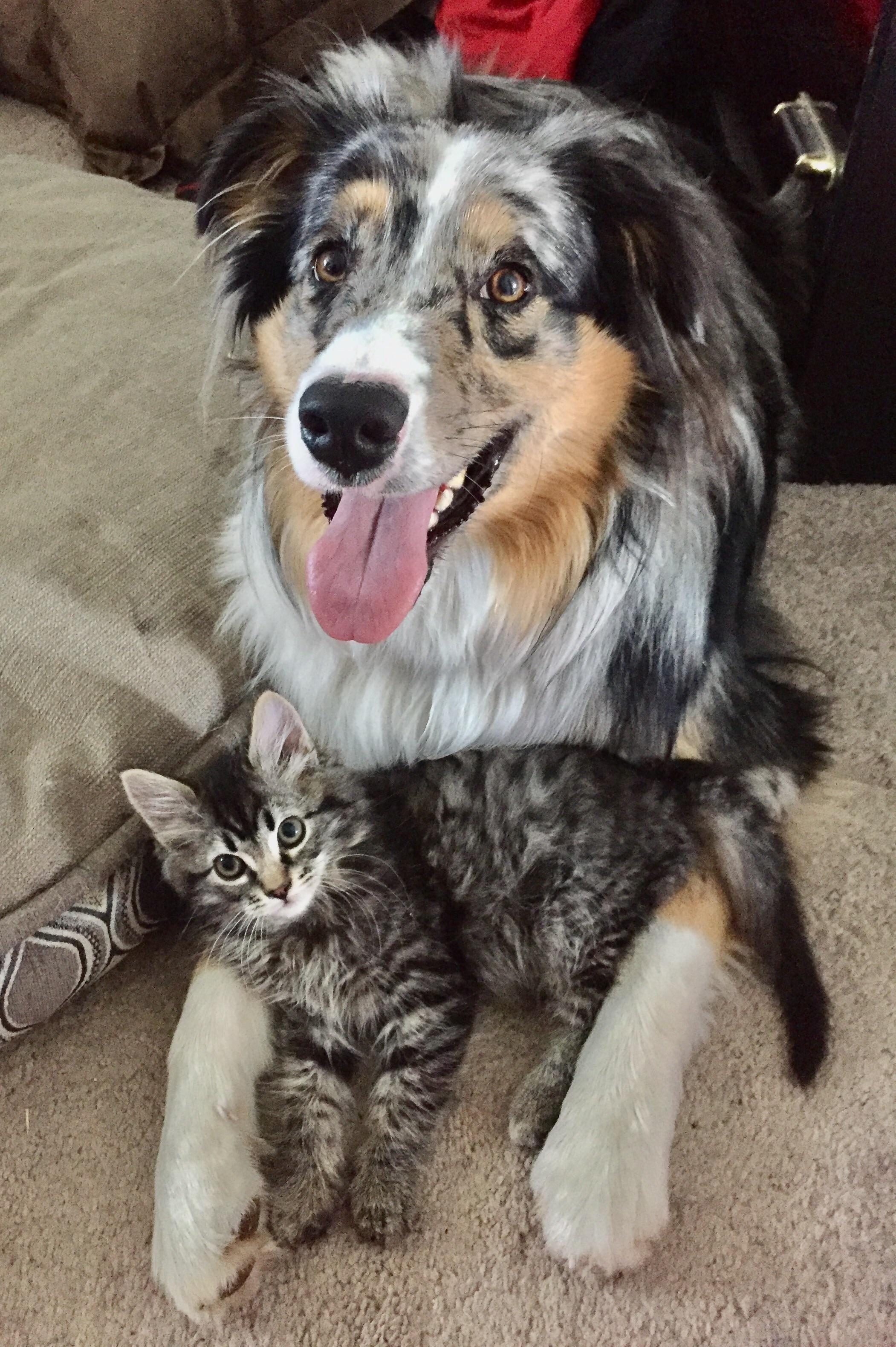 Animals love each other http//ift.tt/2uFYiHK Cuddly