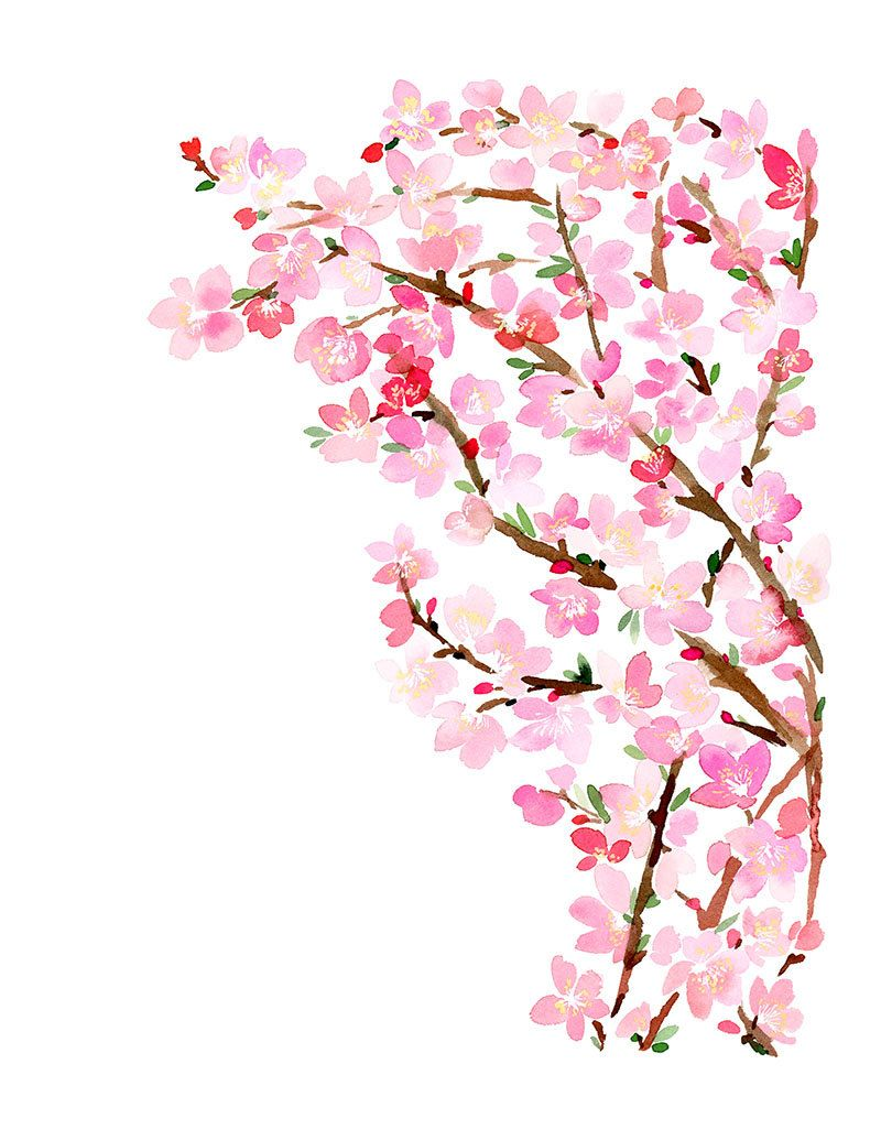ᴡᴀᴛᴇʀᴄᴏʟᴏʀ ᴡʜɪᴍsʏ Cherry Blossom Watercolor Cherry