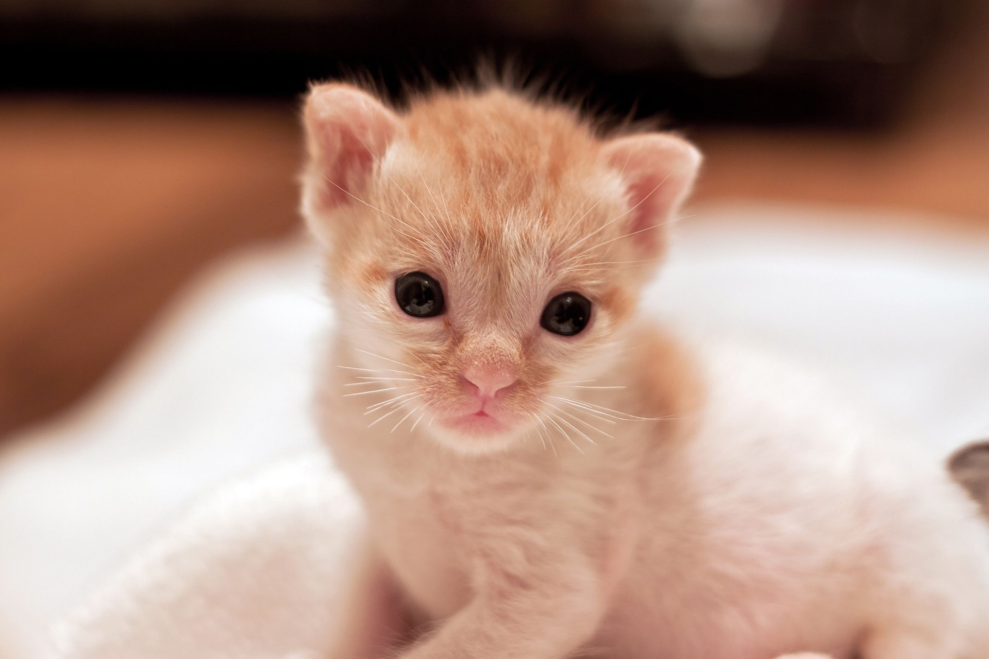 Photos By Liina Novy With Images Kittens Kitty Animals