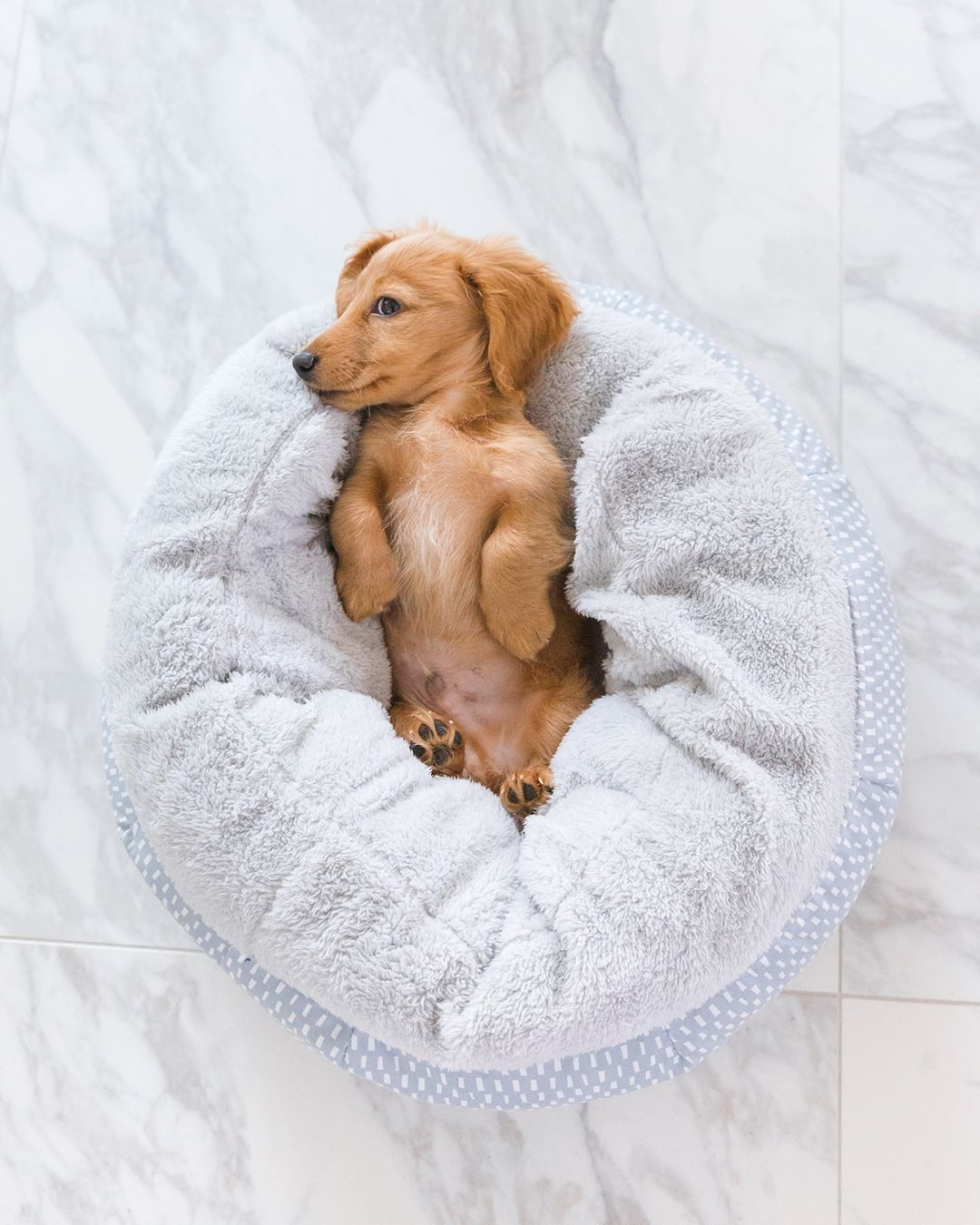 Cute Dachshund Puppy If You Love Dachshunds Visit Our Blog To
