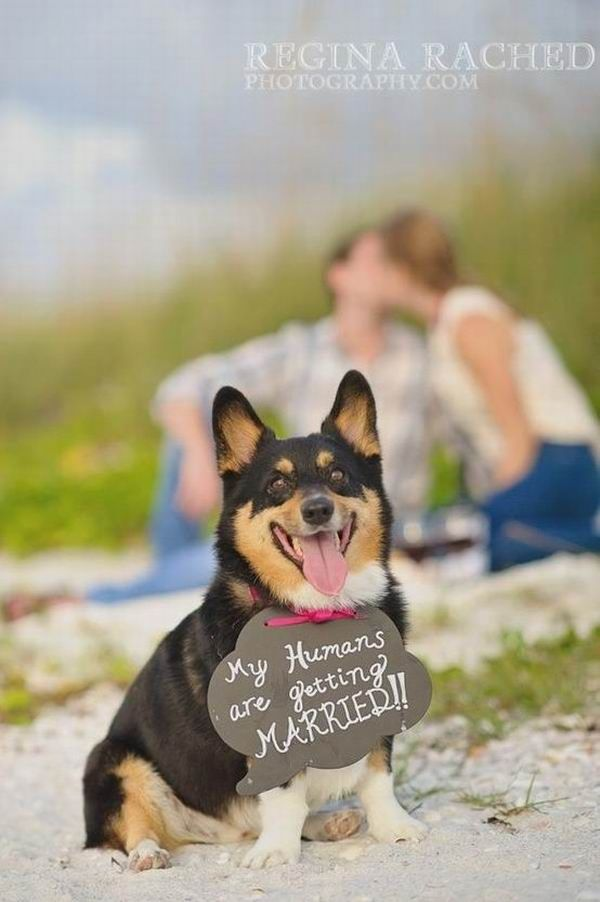 Wedding Shoots Ideas With Pets Adorable Cats Dogs Goats