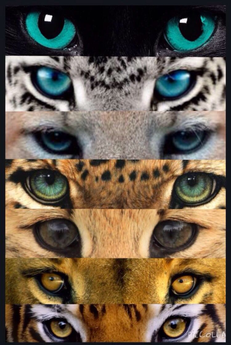 Animal Qui Change De Couleur : animal, change, couleur, Drawing,, Beautiful, Cats,, Animal, Drawings