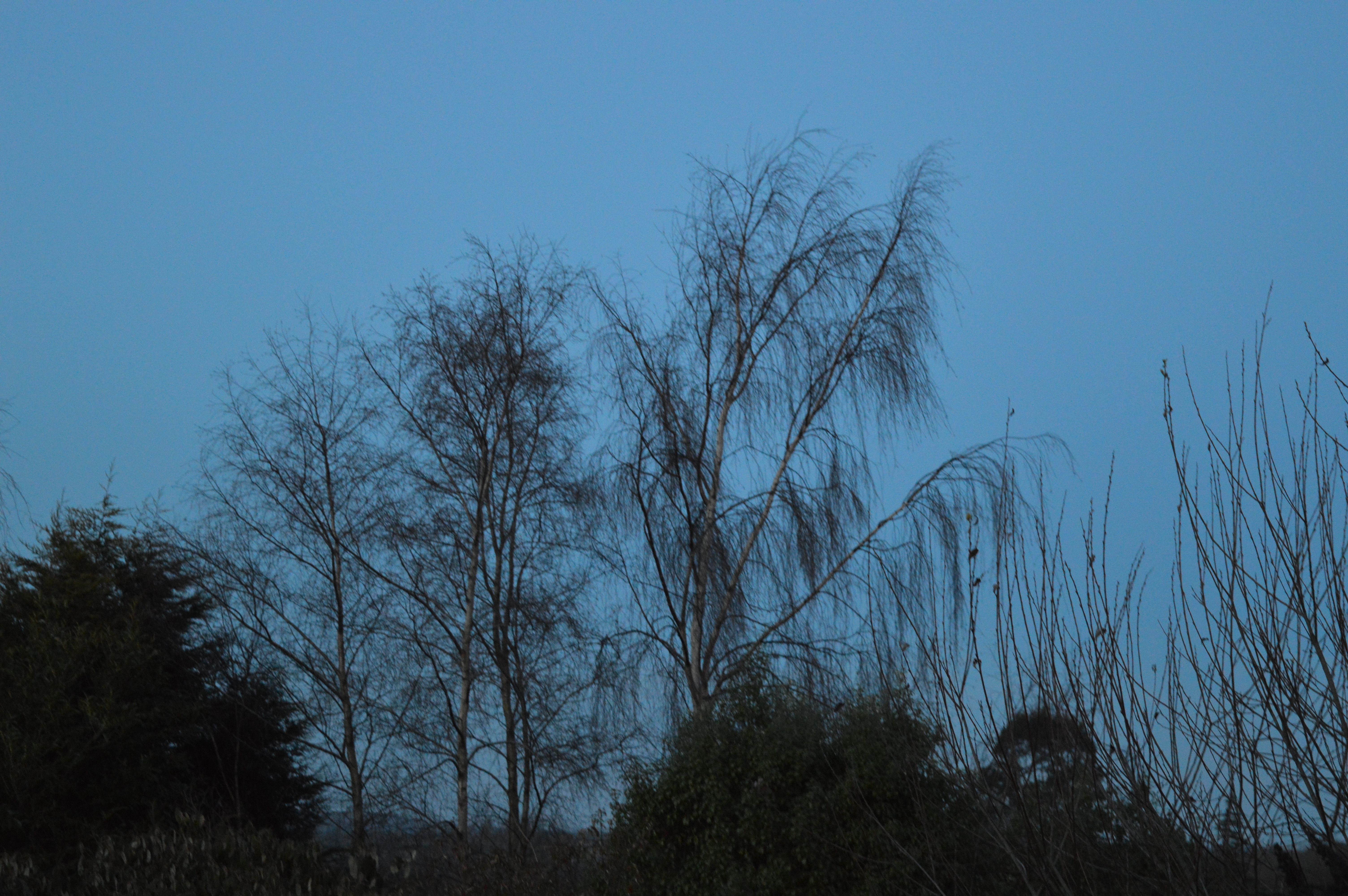 Tree picture 8 Darkish
