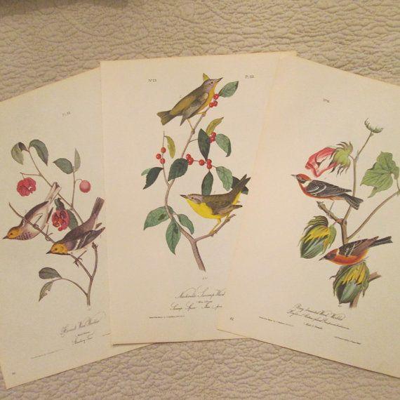 Three Vintage Bird Illustrations  Audubon Book by SimplySuzula