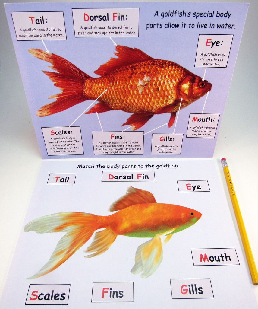 Ivy Kids Subscription Kit | A Fish out of Water by Helen Palmer ...