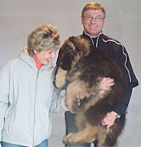 12 Week Old King Shepherd Pup With 6 2 Owner King Shepherd