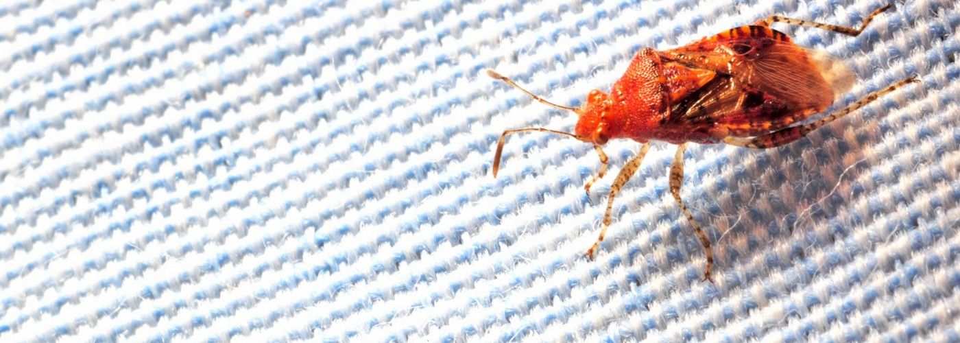 One Surefire Way to Spot Bedbugs in Your Hotel Room Bed