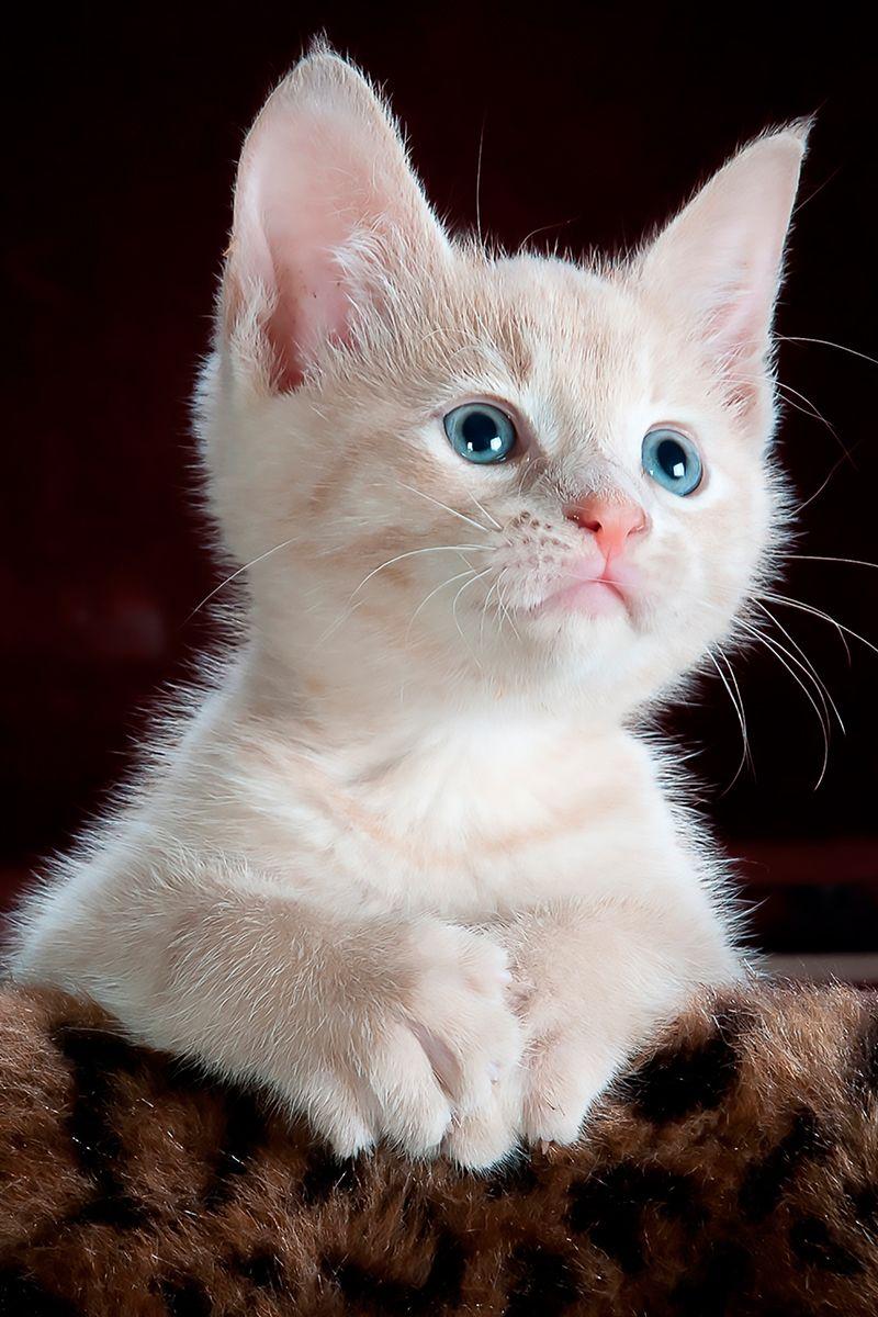 Good night, lovely friends #Cat #Katze #Kitten #Kitty #Gato