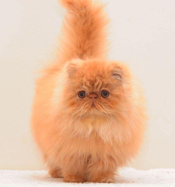 cat stevens the very best of cat stevens songs