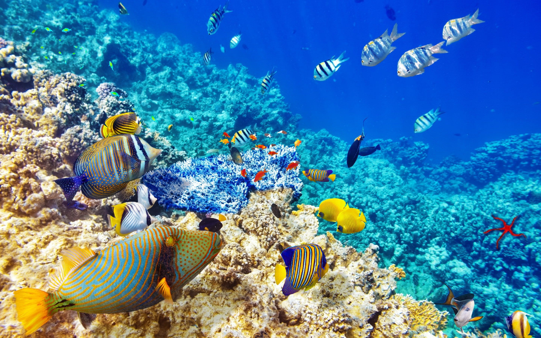 Underwater World Herd Blue Yellow Medium Size Fish Tropical Underwater Coral Reef Fishes Ocean World 2k Underwater Wallpaper Oceans Of The World Fish