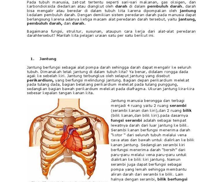 44++ Bagian bagian jantung dan fungsinya trends