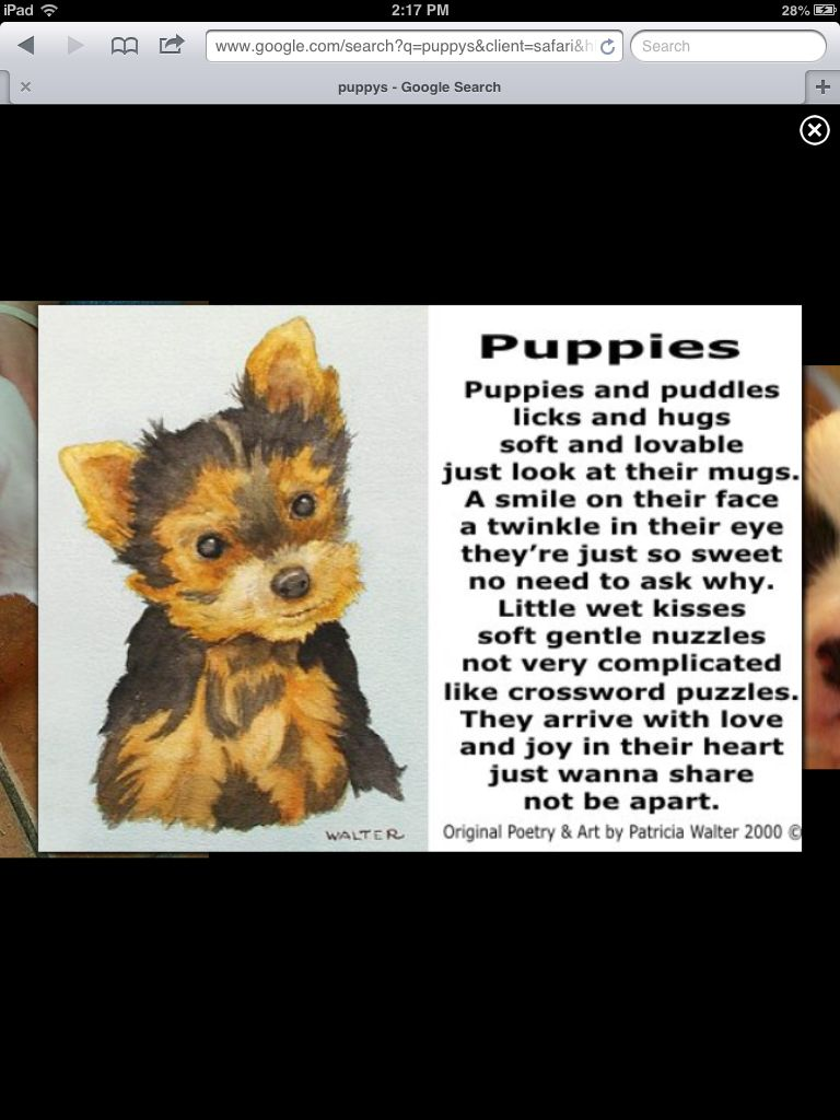 Adorable Puppy Poem Dog Poems Cute Puppy Breeds