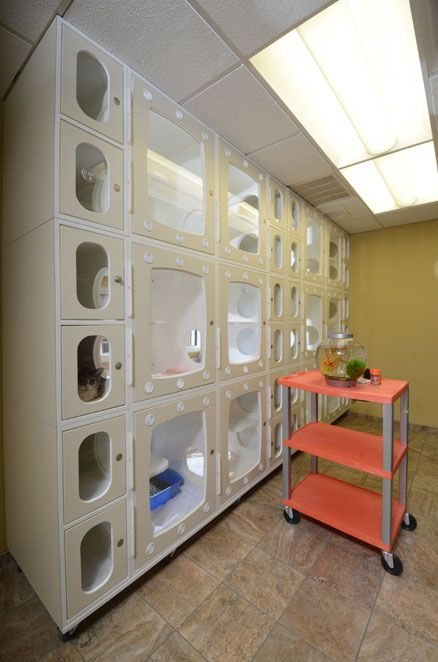 Veterinary Medical Center Of St Lucie County Hospital Design
