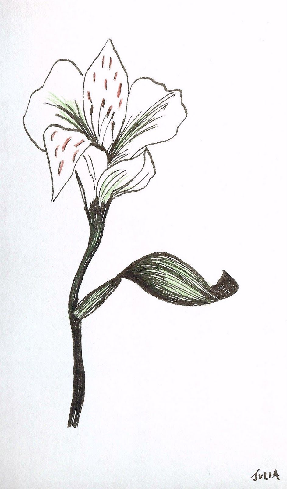 Easy Pen And Ink Drawings Of Flowers In Colored Pencil