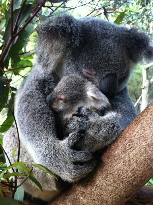 Pin By Kathleen Roberts On Cute Cute Baby Animals Cute Animals Cute Funny Animals
