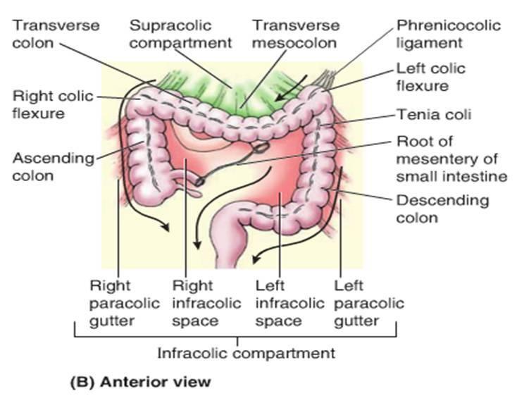 Transverse Colon And Transverse Mesocolon1314491189986 Jpg 734 562 Hernia Repair Gastrointestinal Medical