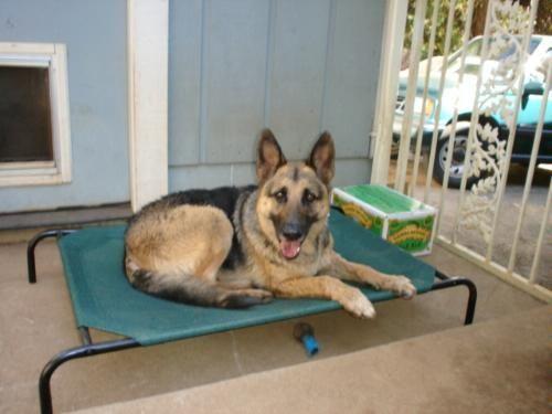 coolaroo large steelframed pet bed brunswick green dogbed hammock cot