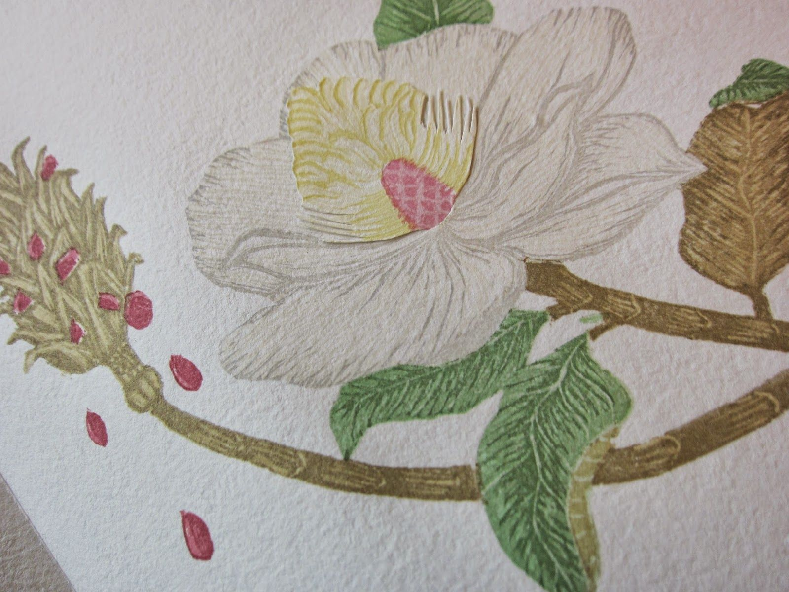Rice Paper Tree: Anatomia Botanica | Artist Books | Pinterest | Anatomía