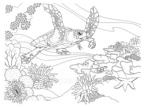Pin By Tamara On School Science Swimming Creatures Ocean Coloring Pages Coral Reef Drawing Coloring Pages