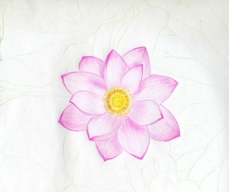 Fiore Di Loto Petali Rosa Stelo Pistillo Disegni Da Copiare