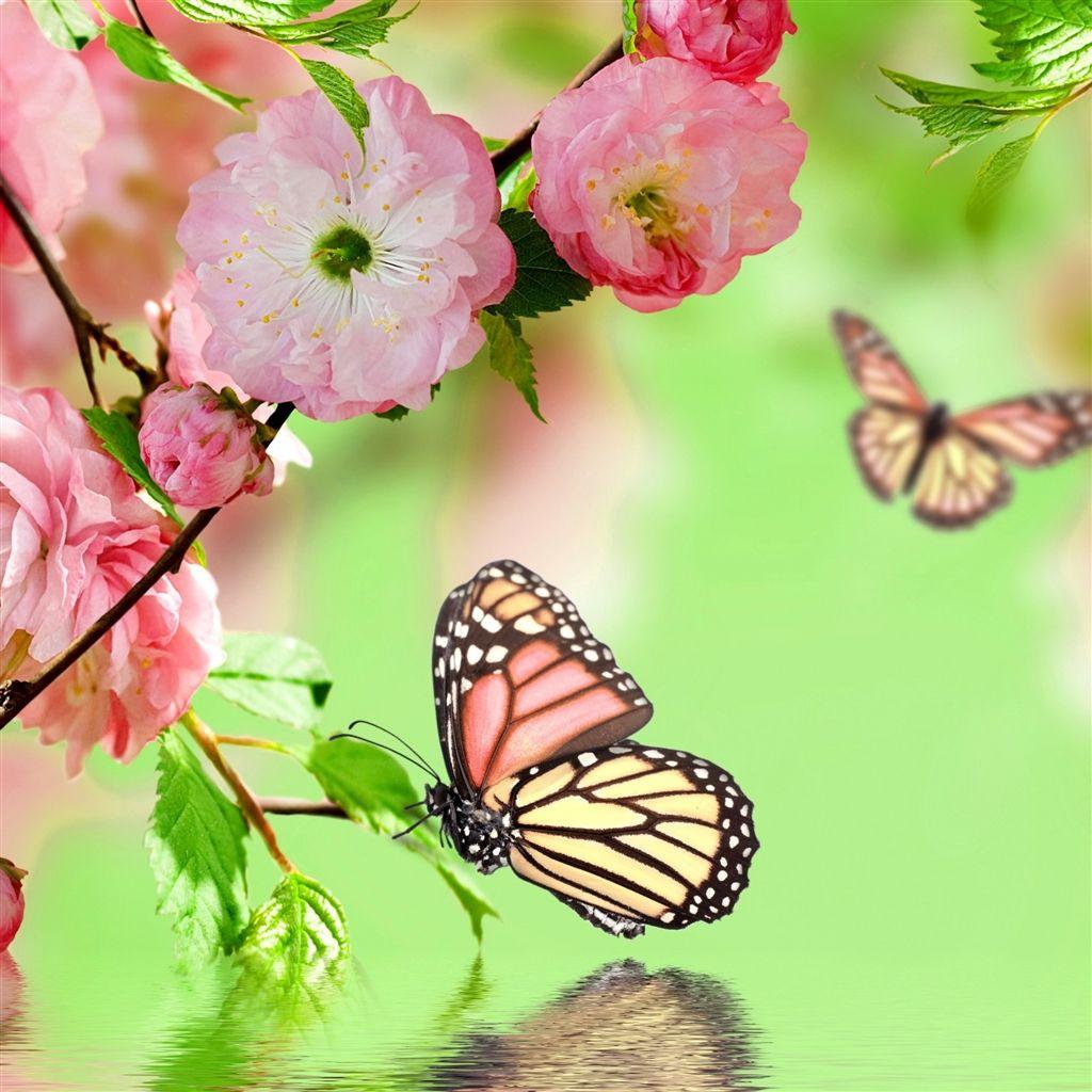 Springtime Joy Ipad Air Wallpaper Download Iphone Wallpapers Ipad Wallpapers One Stop Download Ipad Air Wallpaper Butterfly Wallpaper Spring Wallpaper