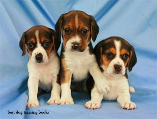 Best Dog Training Books Dog Breed Photos