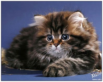 Pin By Lisa Luke On Stuff Animals Funny Cats Cats Kittens Cutest