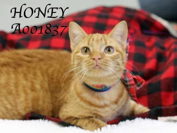 Honey is a sweet kitty, and she doesn't have a home. Won't