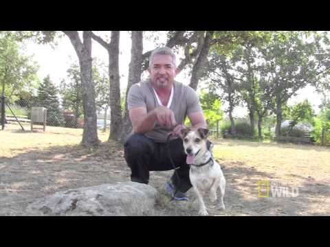 """Exlusive Behind the Scenes Clip from """"Mambo Madness"""" - Cesar Millan's """"Leader of the Pack"""""""