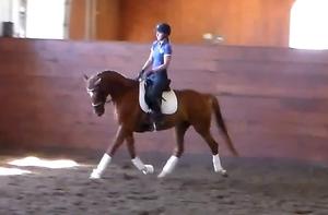 Wehnelt- Training Level, Oldenburg mare