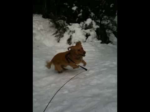 Sparky goes CrAzY in the snow...just one of the many fun outtings we offer.