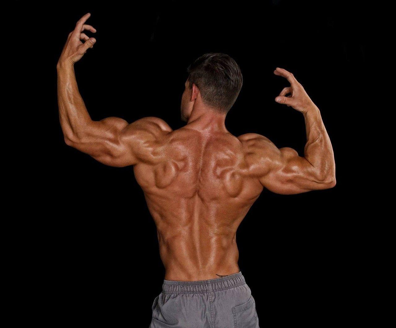 Tom Coleman Model Tom coleman / hd body - | Tom Coleman