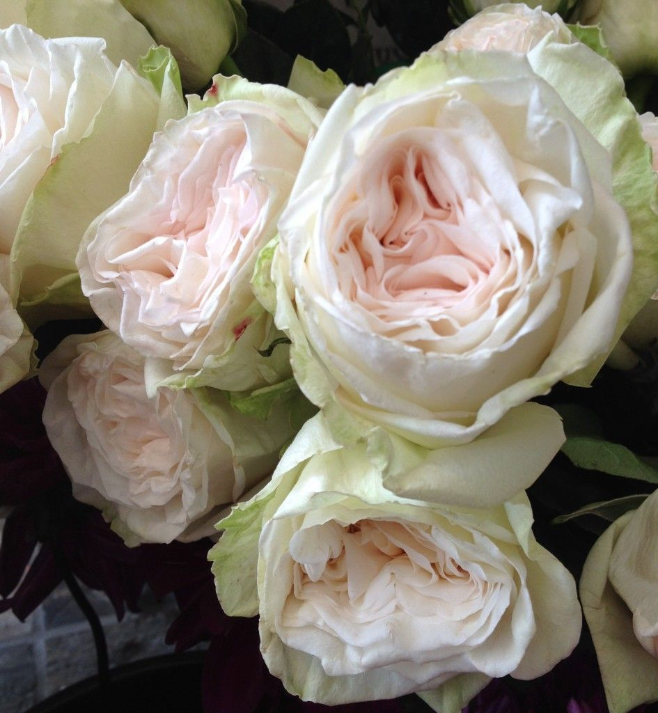 peony alternatives for your wedding white ohara garden roses - White Patience Garden Rose
