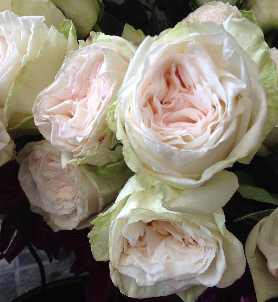 Peony Alternatives For Your Wedding  White Ohara Garden Roses .