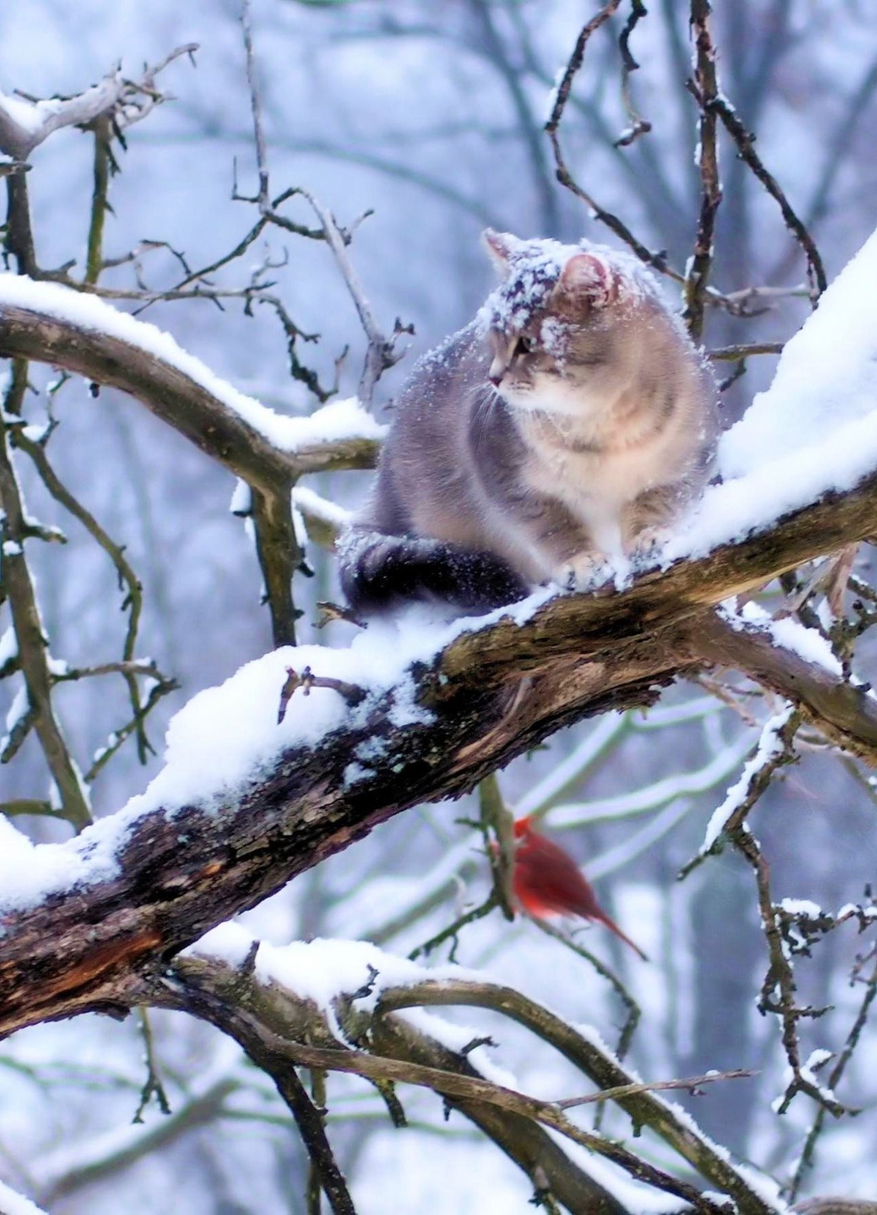 The Way A Crow Shook Down On Me The Dust Of Snow From A Hemlock Tree Has Given My Heart A Change Pretty Cats Cats Crazy Cats